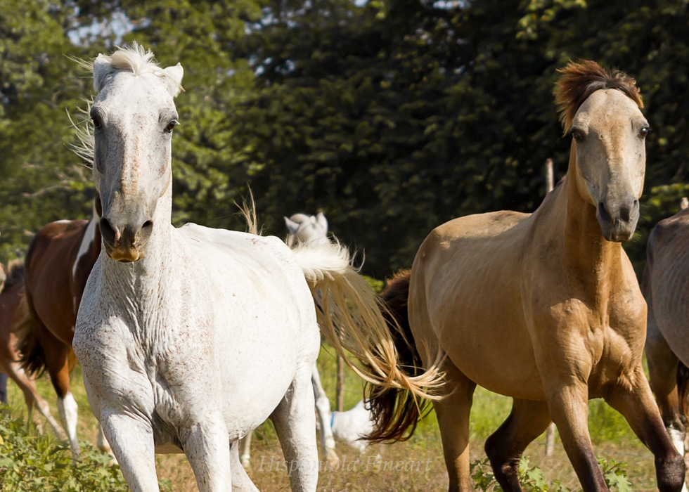 sorry friends… again horses … but its one of my passions  :D